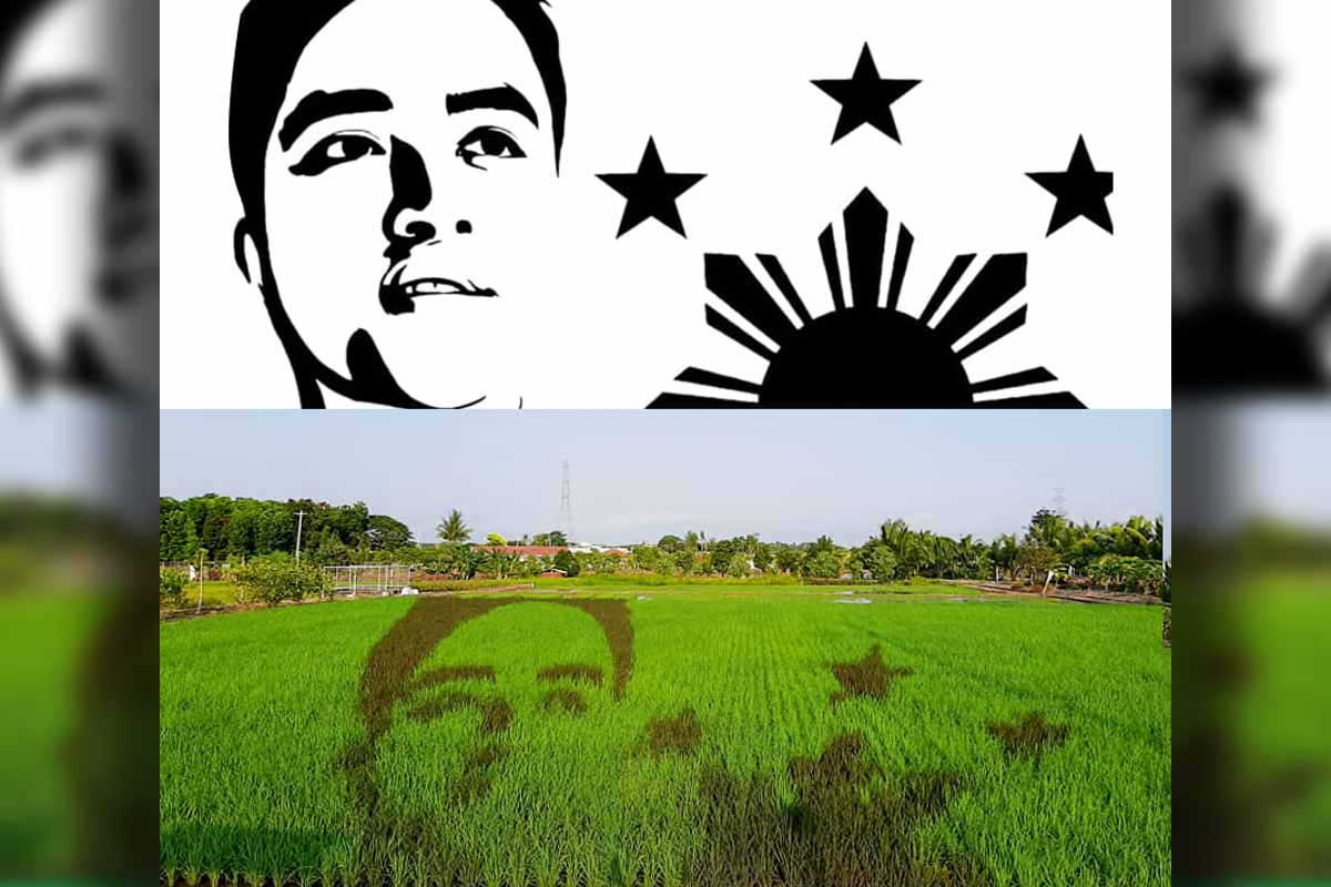 Vico Sotto rice paddy art